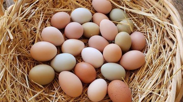 رژیم کتو تخم مرغ