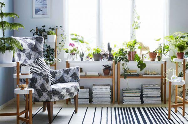 مزیت های سلامتی داشتن گیاهان در خانه یا محل کار
